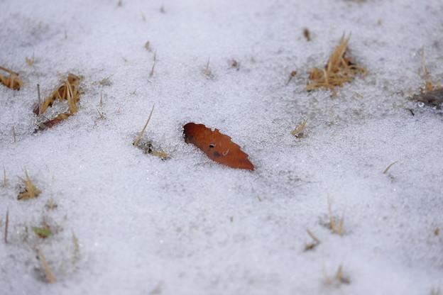 Photos: 冬の訪れ