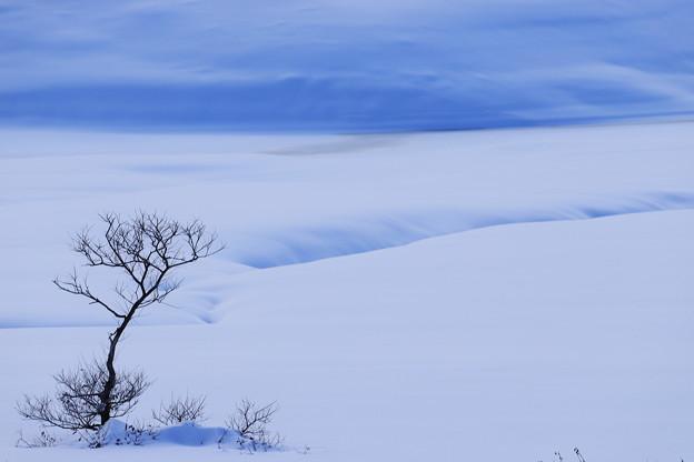 Photos: 静寂の雪原