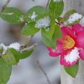 写真: 春浅し