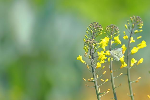 Photos: 初夏の畑