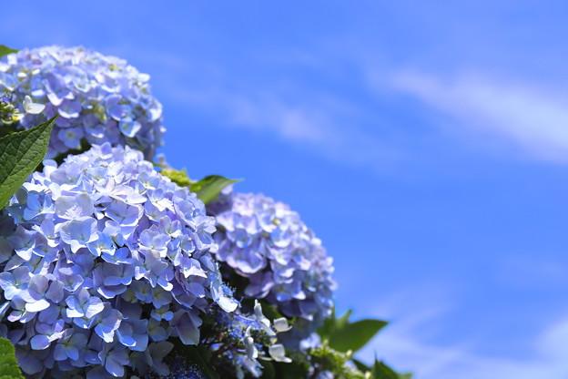 Photos: 梅雨の中休み