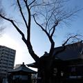 Photos: 本立寺