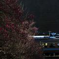 写真: 春の入り口