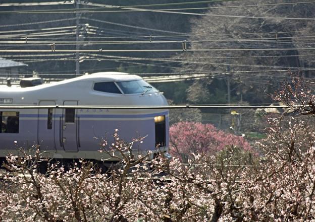 E351系最後の春