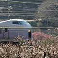 写真: E351系最後の春