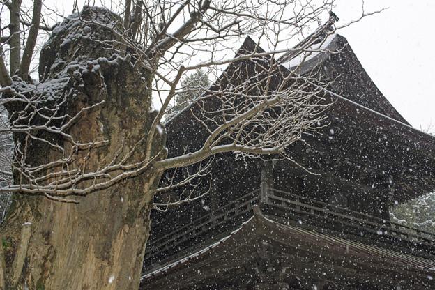 春分の大雪