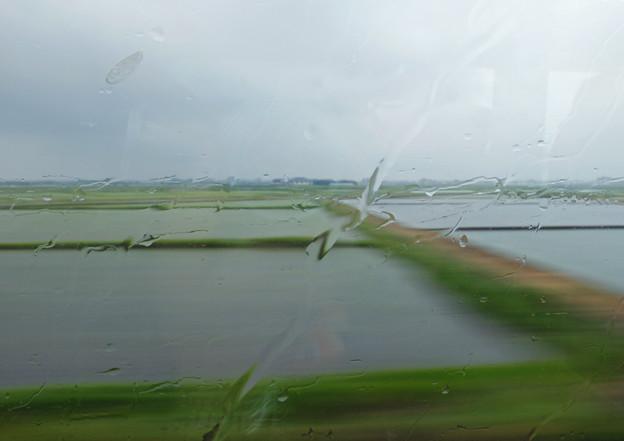 写真: 梅雨のはしり