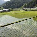 写真: 緑色のストライプ