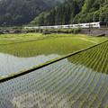 写真: 山と田んぼ