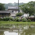 Photos: 雨上がり
