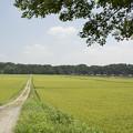 Photos: 田舎道