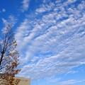 Photos: かっきーんとした空