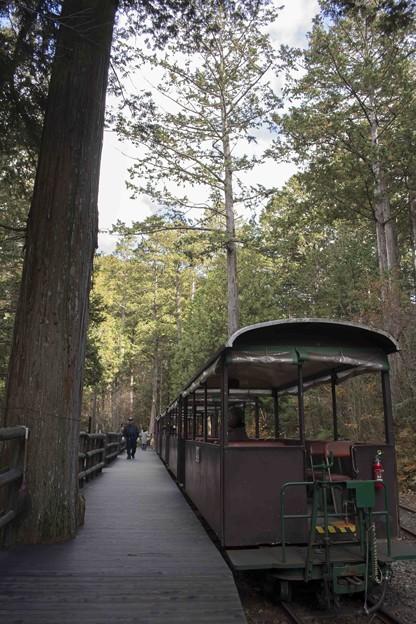 森の中の停車場