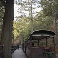 Photos: 森の中の停車場