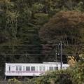 Photos: 茶色い秋