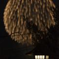 Photos: 秋の大輪