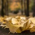 写真: 落ち葉の群れ