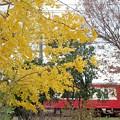 Photos: 黄と赤1