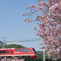 写真: 赤とピンク