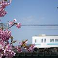 写真: 電車はレフ版