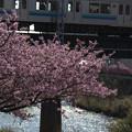 写真: 春の川面