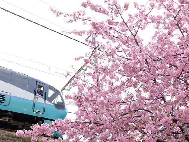 写真: 桜の希望も安全運行