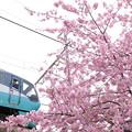 Photos: 桜の希望も安全運行