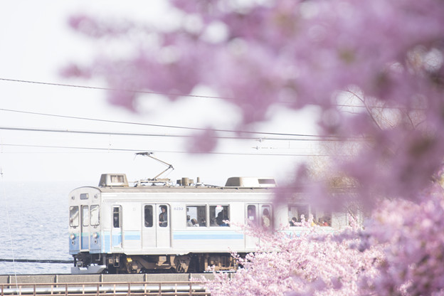 Photos: 春の淡い日差しを受けて