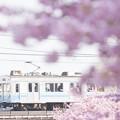 写真: 春の淡い日差しを受けて
