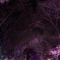 Photos: 怪しの森