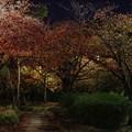 写真: 近所の紅葉