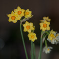 写真: 春を先取り