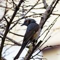 写真: 春の野鳥