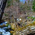 写真: 滝見風景