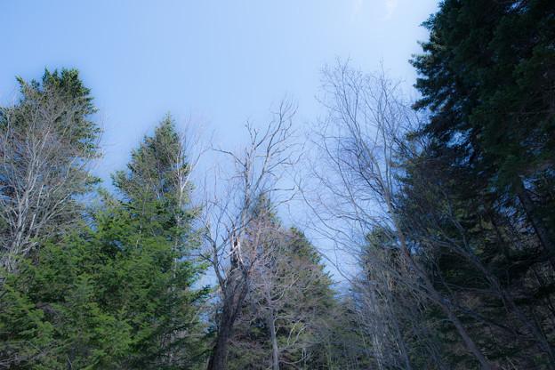Photos: 空と林