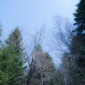 写真: 空と林
