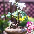 写真: 花盆栽!!!