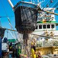 写真: ー活気溢れる漁港II-