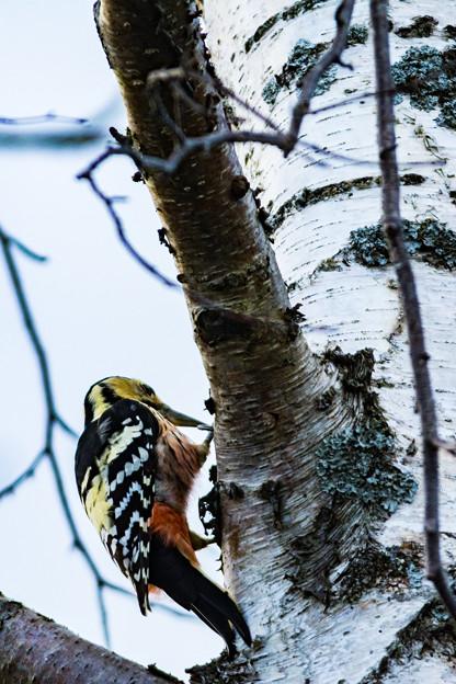 ー野鳥II-