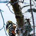 Photos: ー野鳥II-