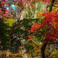 写真: ー色とりどりの紅葉ー