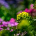 Photos: ー我が家の庭先ー
