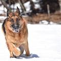 写真: 冬の散歩