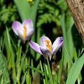 今年の春の庭で