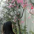 写真: 桃の小道
