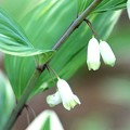 写真: お庭のサプライズ