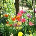 写真: 春のお庭