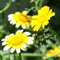 写真: 野菜の花