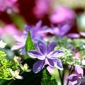 ダンスパーティー 紫