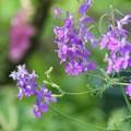 持久力のある花